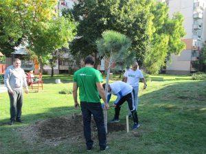 """Нови дървета и храсти в парковете на """"Тракия"""""""